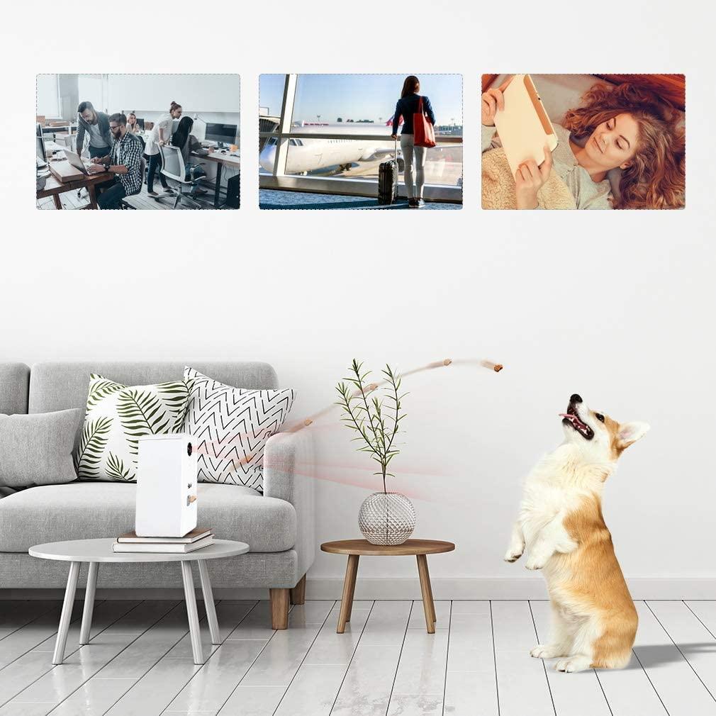 Come si sceglie la migliore telecamera per cani e gatti?